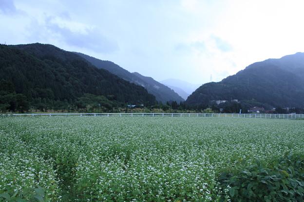 ソバ畑と山並み