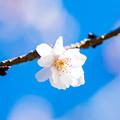 写真: 春よ来てぇ~!
