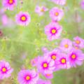 写真: 春よ来い!