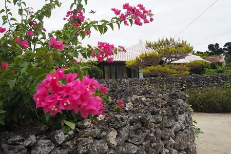 ブーゲンビリア 竹富島