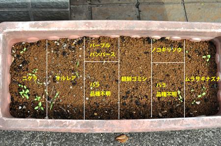 花の種 発芽