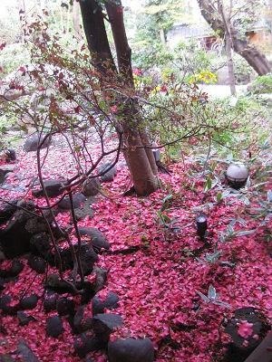 14.55 真っ赤な花びらが散ってs