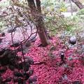 Photos: 14.55 真っ赤な花びらが散ってs