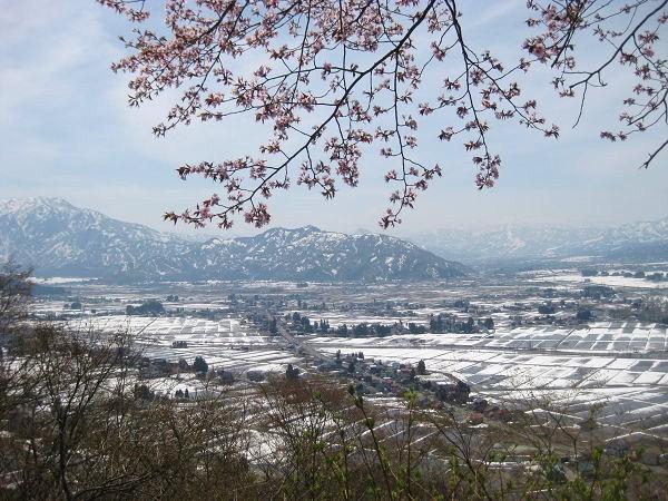 11.12 桜と雪景色s
