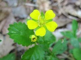 10.24 黄色い花s