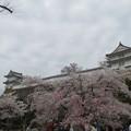 Photos: ワの櫓(左)と カの櫓(右)