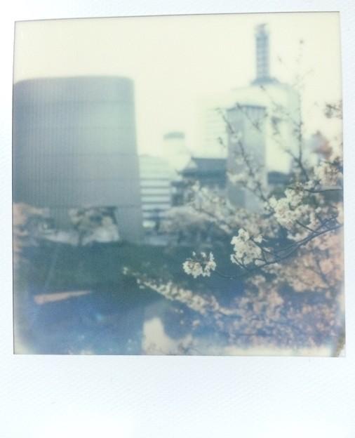 散り急ぐ春