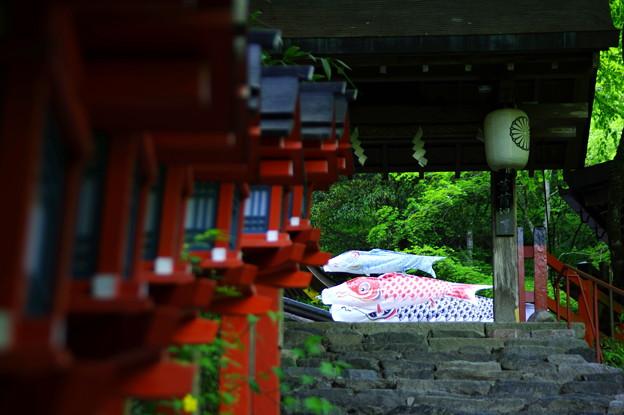 Photos: 貴船神社の連燈籠