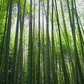 Photos: 緑竹の園