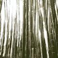 竹に魅せられて
