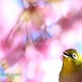 Photos: 河次郎-31