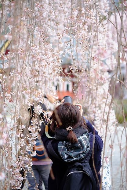 桜`15(久遠寺編)-29