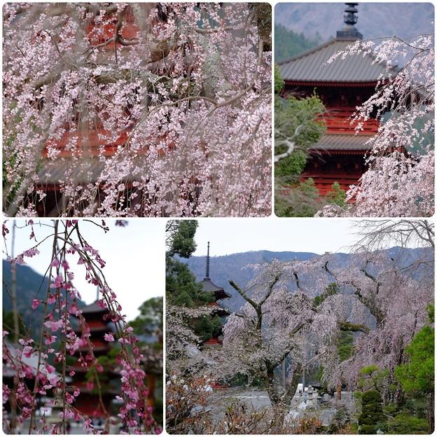 桜`15(久遠寺編)-32