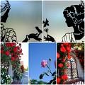 Photos: バラ色の日々`15-2
