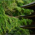 Photos: 杉