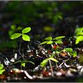 Photos: 新しい森
