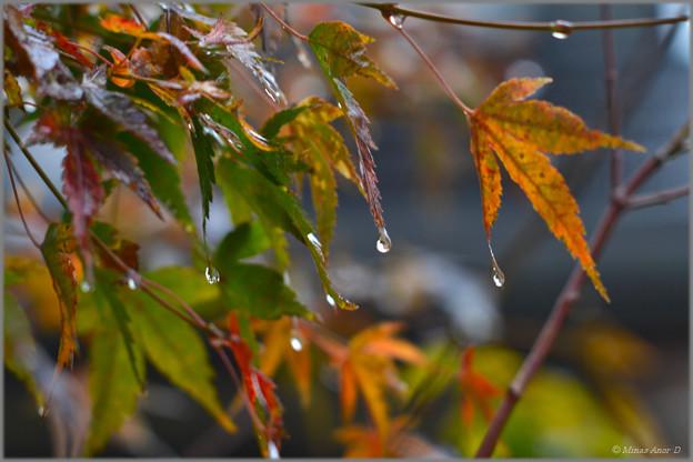 Photos: 時雨