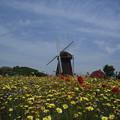 大阪 万博公園 丘の上の風車