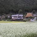 京都 美山 そばの花と茅葺屋根の家