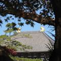 秋の大仏殿2016