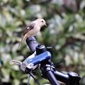春風は自転車に乗って・・