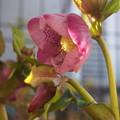 Photos: わたしの花
