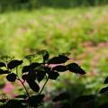 写真: 香る花の向こうは