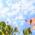 Photos: 秋空恋し
