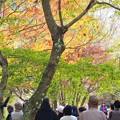 Photos: 六甲山 装う