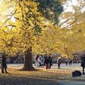 Photos: 一本の木があれば