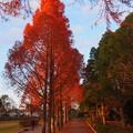 写真: 神戸の秋
