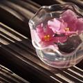 Photos: 花氷の朝