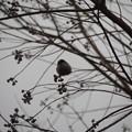 写真: 鳥撮り奮戦記(1)