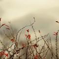 写真: 秋と春の間