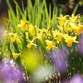 写真: 紫霞の向こう