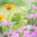 写真: さくら 咲く頃