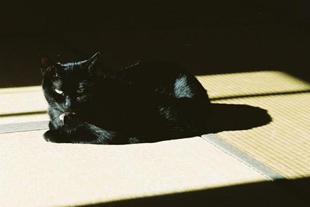陽だまりのぽん_elmar90mm