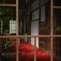 写真: 新緑_是清邸