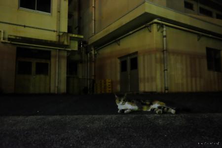 夜猫-1955