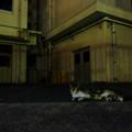 写真: 夜猫-1955