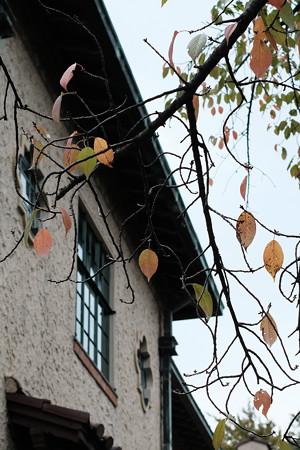 ハロウィン_10桜紅葉-0577