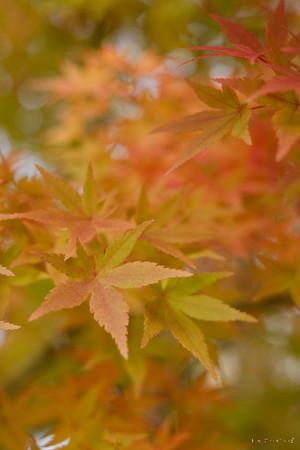 09松代_紅葉-0701