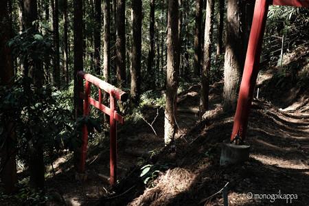20木漏れ日-3308