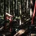 写真: 20木漏れ日-3308