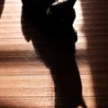 写真: 野良猫化するポン-3210