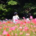 ポピー畑でシャボン玉を出す女性。。くりはま花の国 20160529