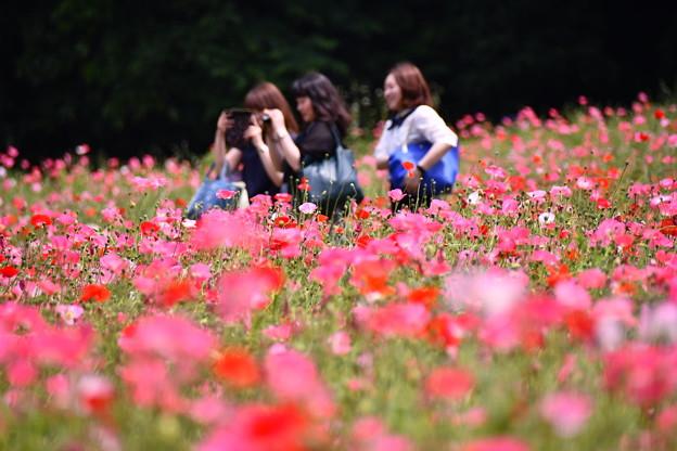 ポピー畑で女子たちはしゃぐ。。くりはま花の国 20160529