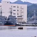 田浦港。。木造船の掃海艇三隻。。はちじょう、つしま、やえやま。。20160619