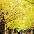 散歩する人々。。昭和記念公園イチョウ並木 20161110