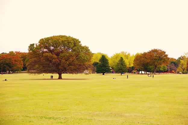 秋めいて。。昭和記念公園みんなの原っぱ 20161110